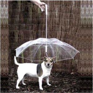 umbrella-for-pets-against-rain